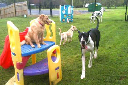 Off-Leash Dog Parks in Buffalo, NY - BringFido