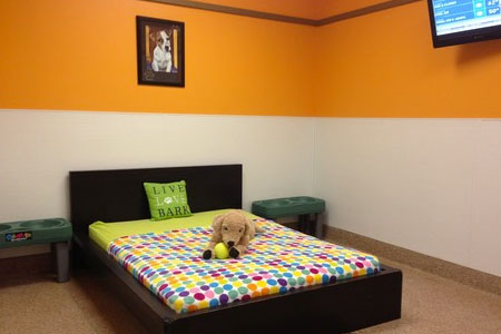 Cat & Dog Daycare, Boarding, Grooming, Training & Pet Store