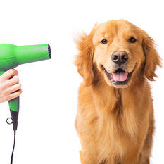 dog blow dry