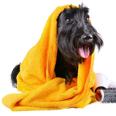 dog in towel