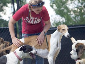 Caring for a greyhound