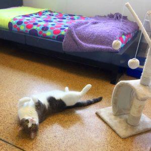 cat boarding
