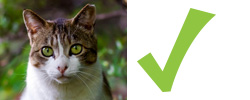 Checklist for cats