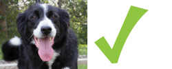 Checklist for dogs